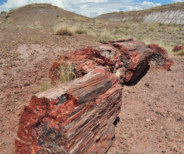 Petrified_Forest_small