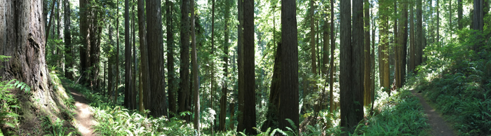 00.Redwood_pano_primeval