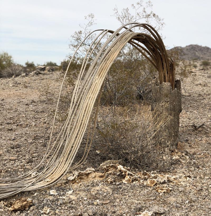 saguaro_09